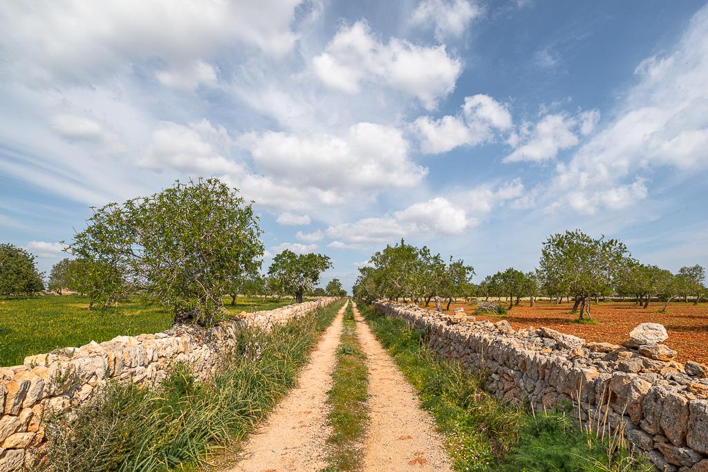Ein uriger Pfad verläuft durch eine naturbelassene Landschaft in Europa