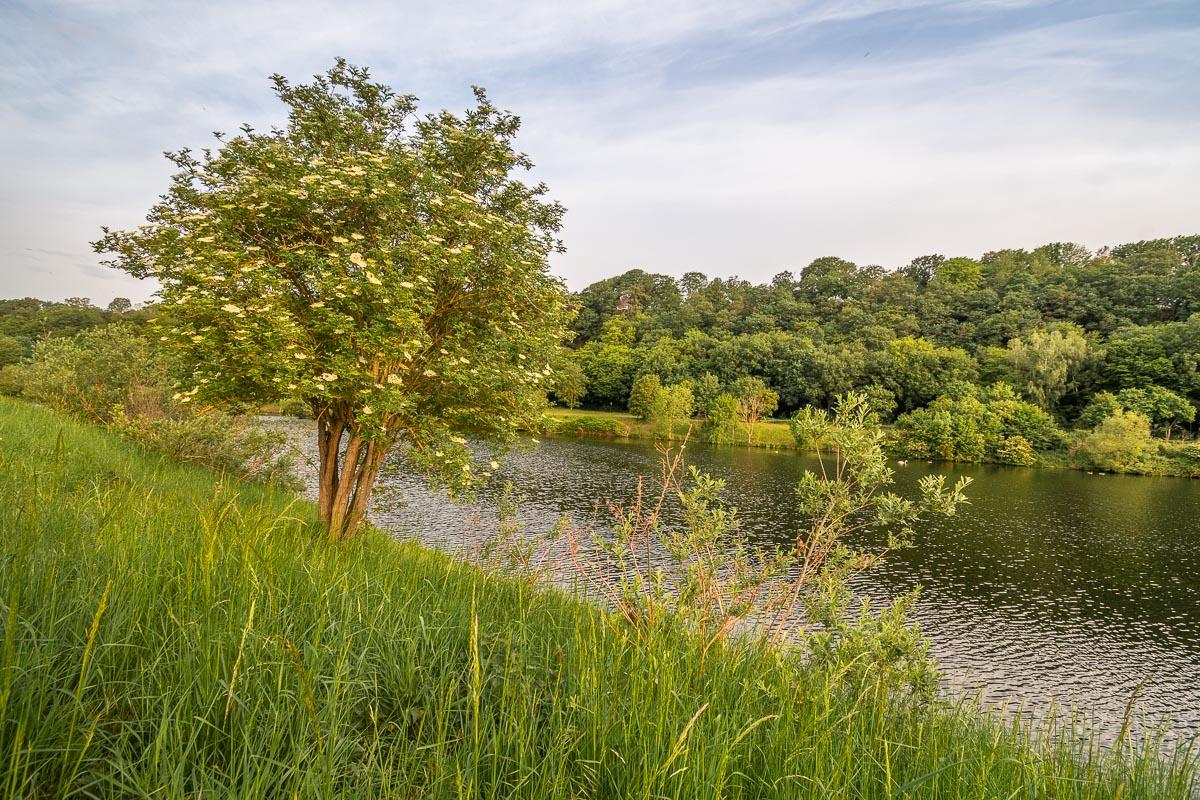 Blick auf das idyllische Ufer des Kemnader Sees im Ruhrgebiet
