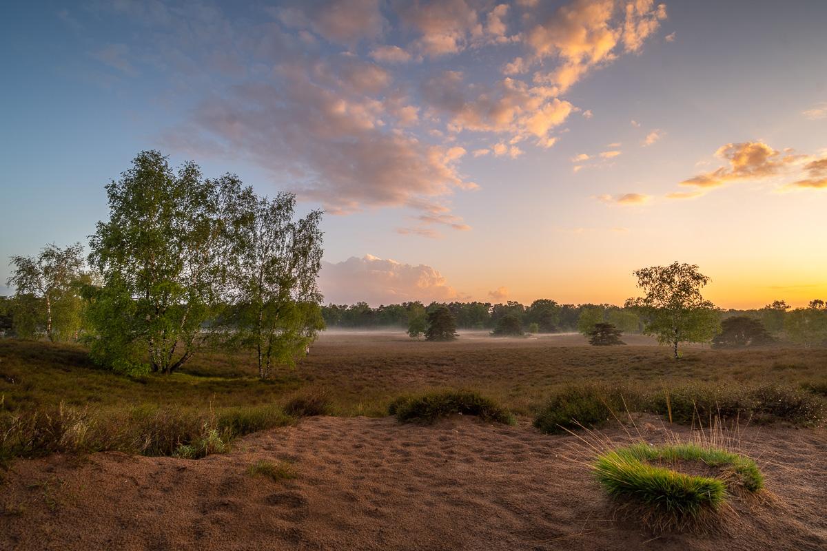 Naturerlebnis in der Westruper Heide im Ruhrgebiet