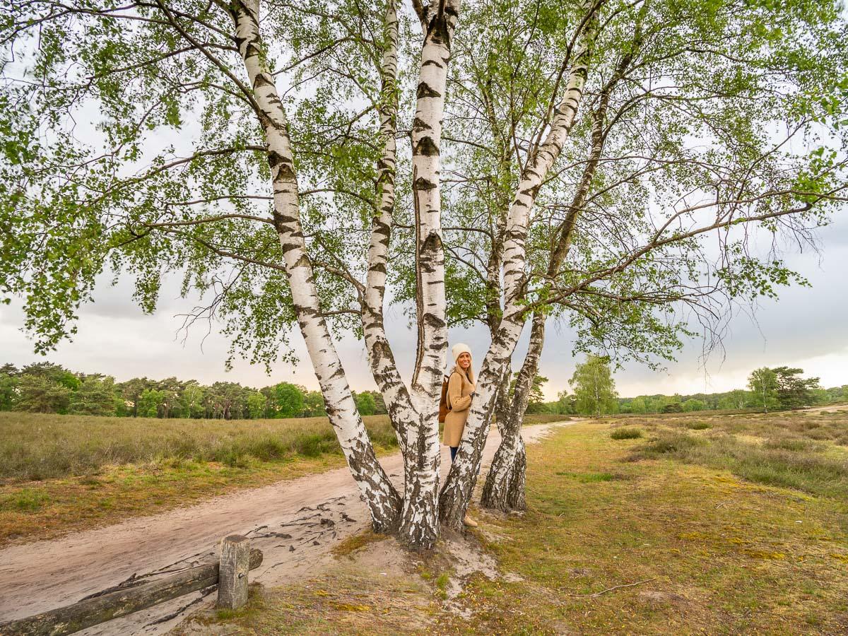 Frau steht in der Heidelandschaft unter einer Birke