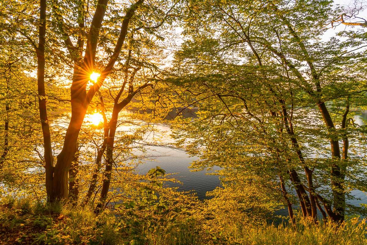 Idylle pur im Ruhrgebiet: Blick auf das Wasser umrandet von dichten Bäumen