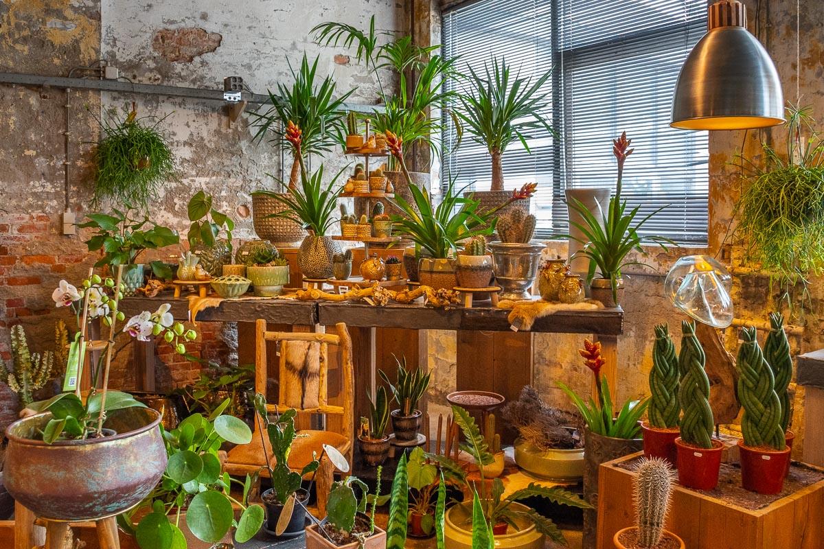 Viele Dekoartikel in einem wunderschönen Geschäft auf Texel