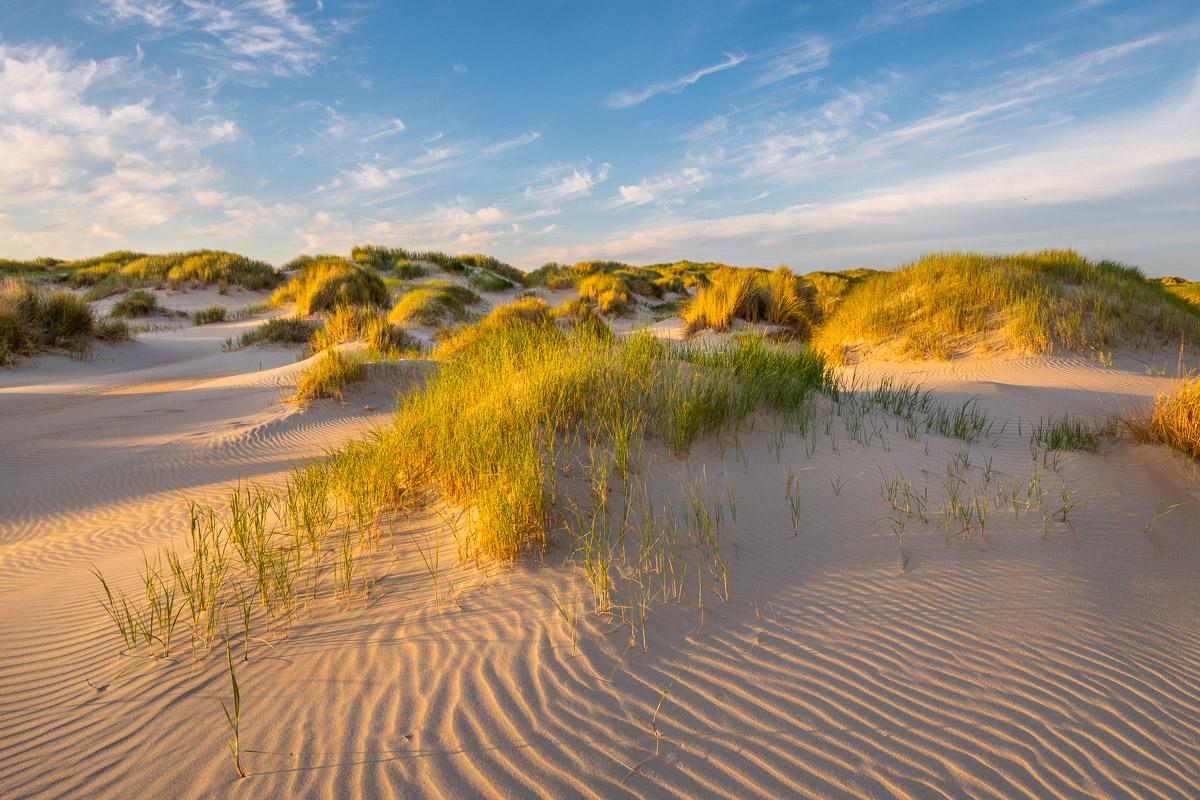 Dünenlandschaft in einem sanftem Licht auf Texel