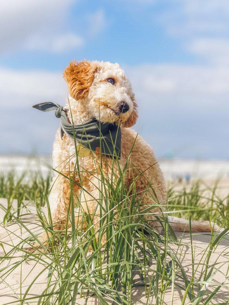 Hund sitzt im Sand auf Texel