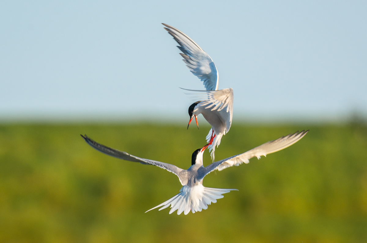 Vogelfotografie auf Texel