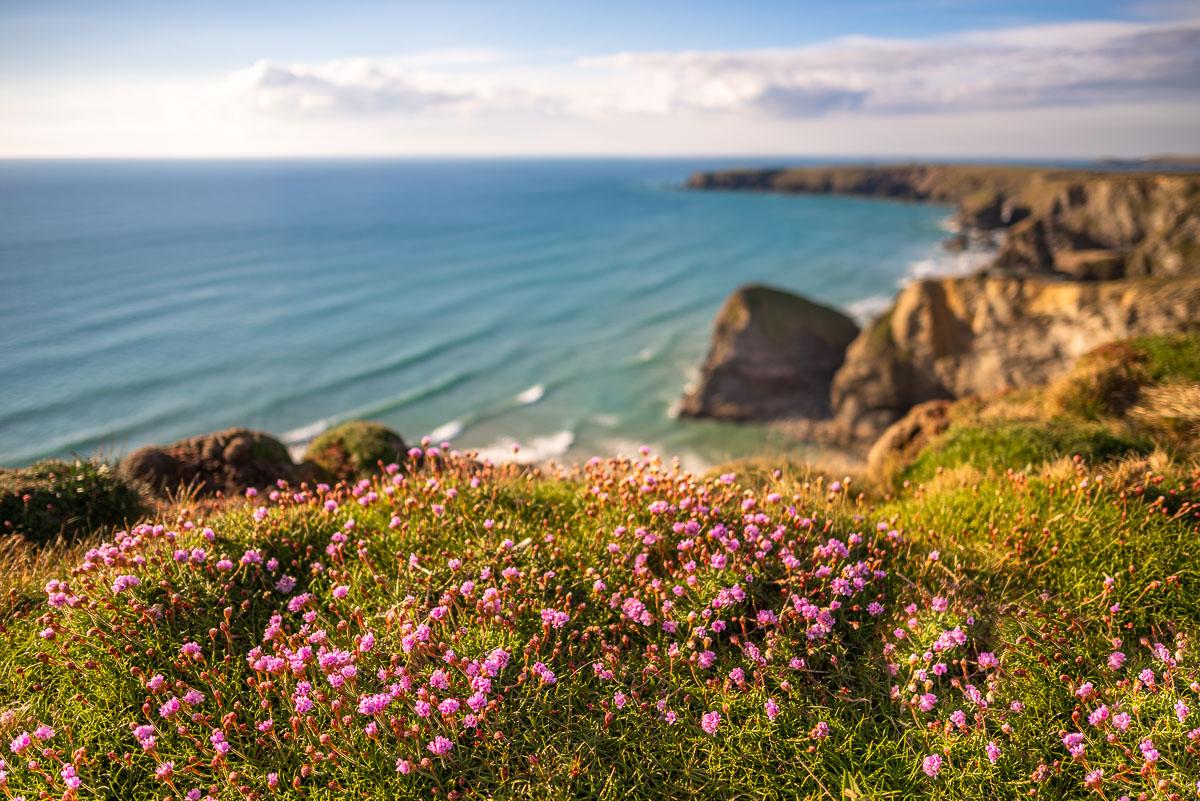 Blick auf eine blaue Küste umrandet von Blumen