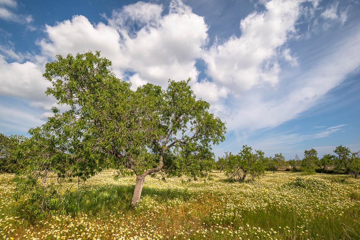 Grüner Baum auf blühender Wiese mit blauem Himmel