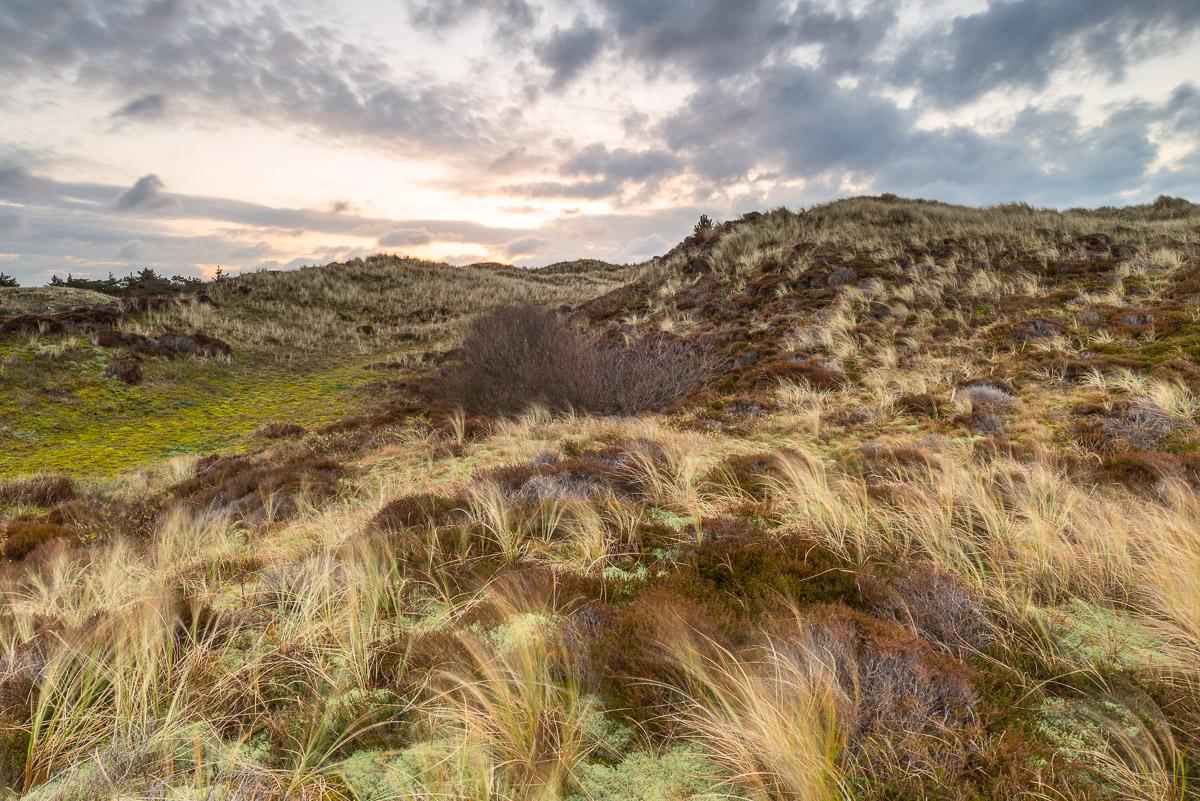 Landschaft im Gebiet Het Alloo