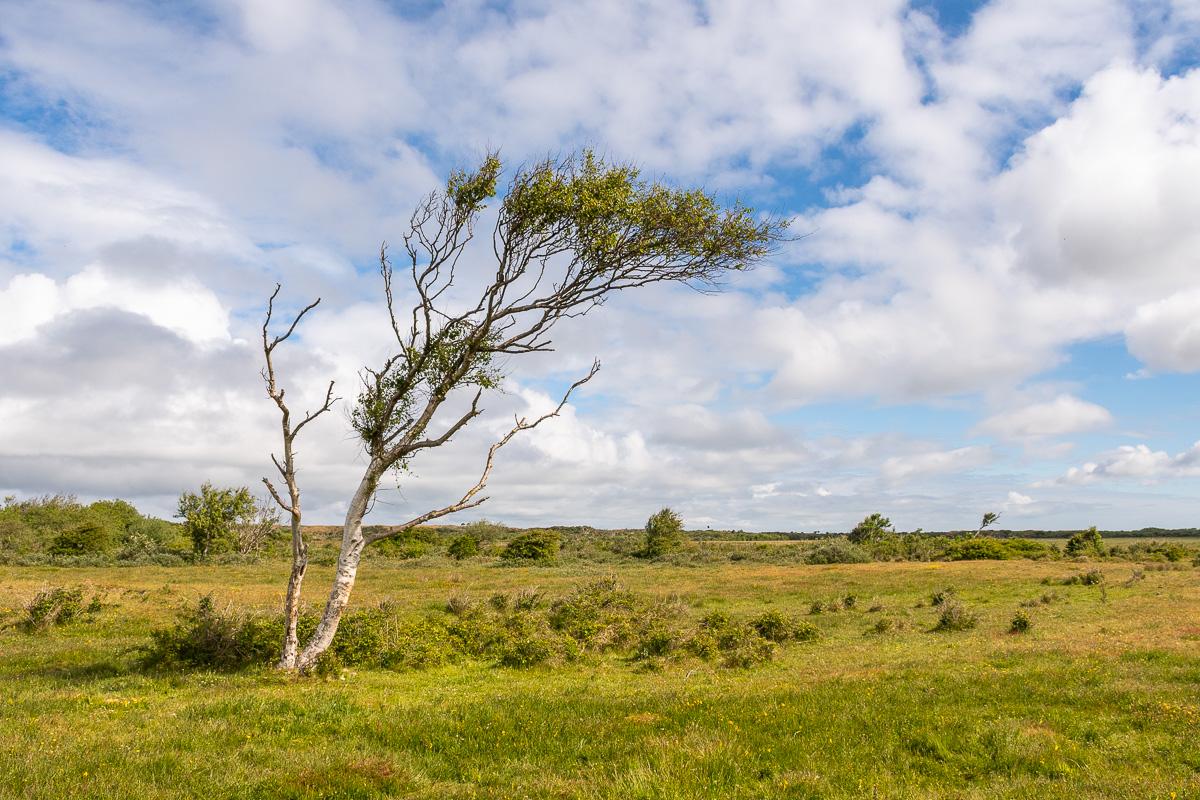 Schiefer Baum im Gebiet De Muy