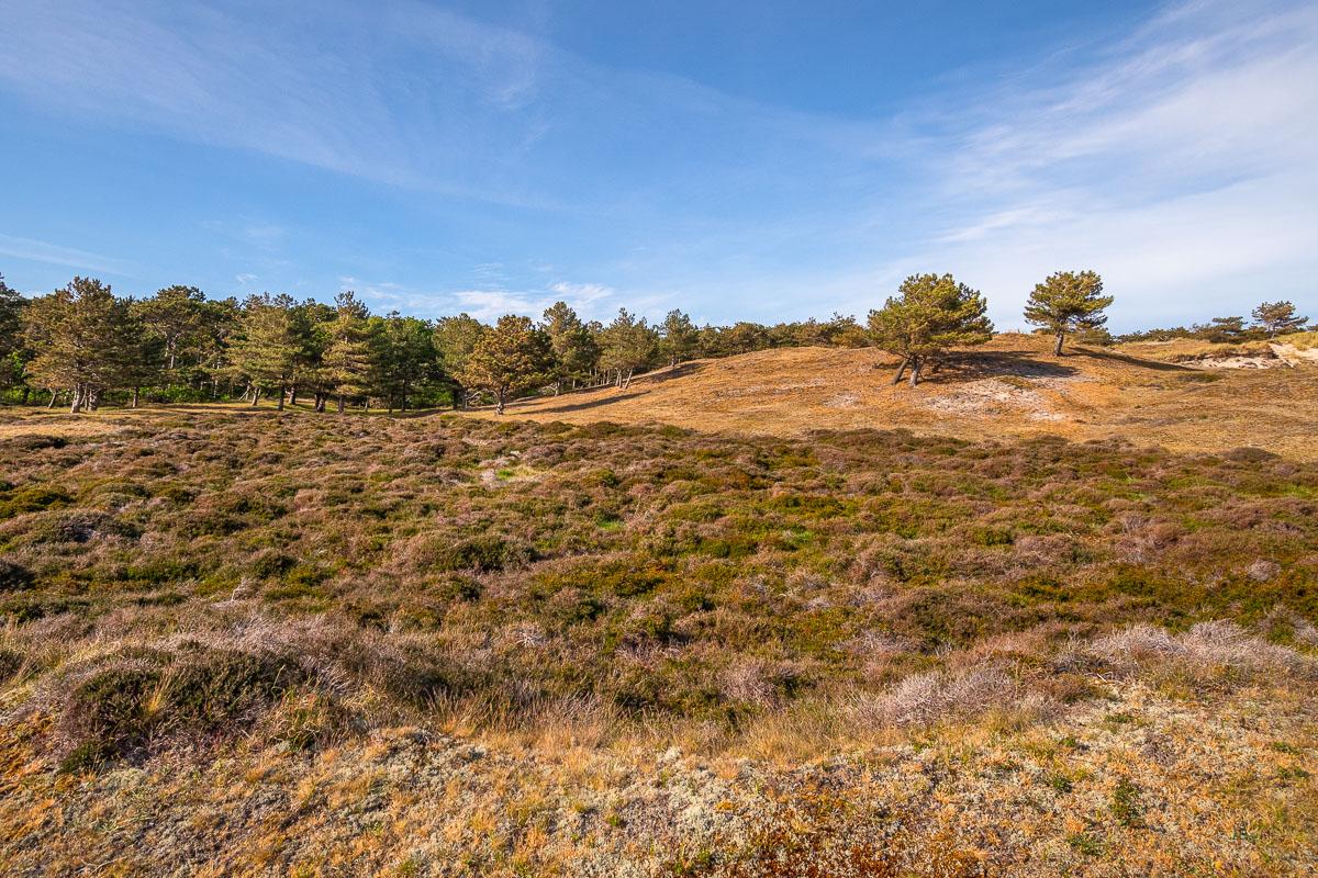 Natur und Landschaft in De Bollekamer auf Texel
