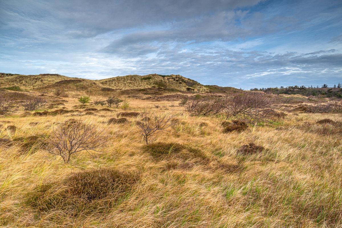 Weite Landschaft im Gebiet De Bollekamer