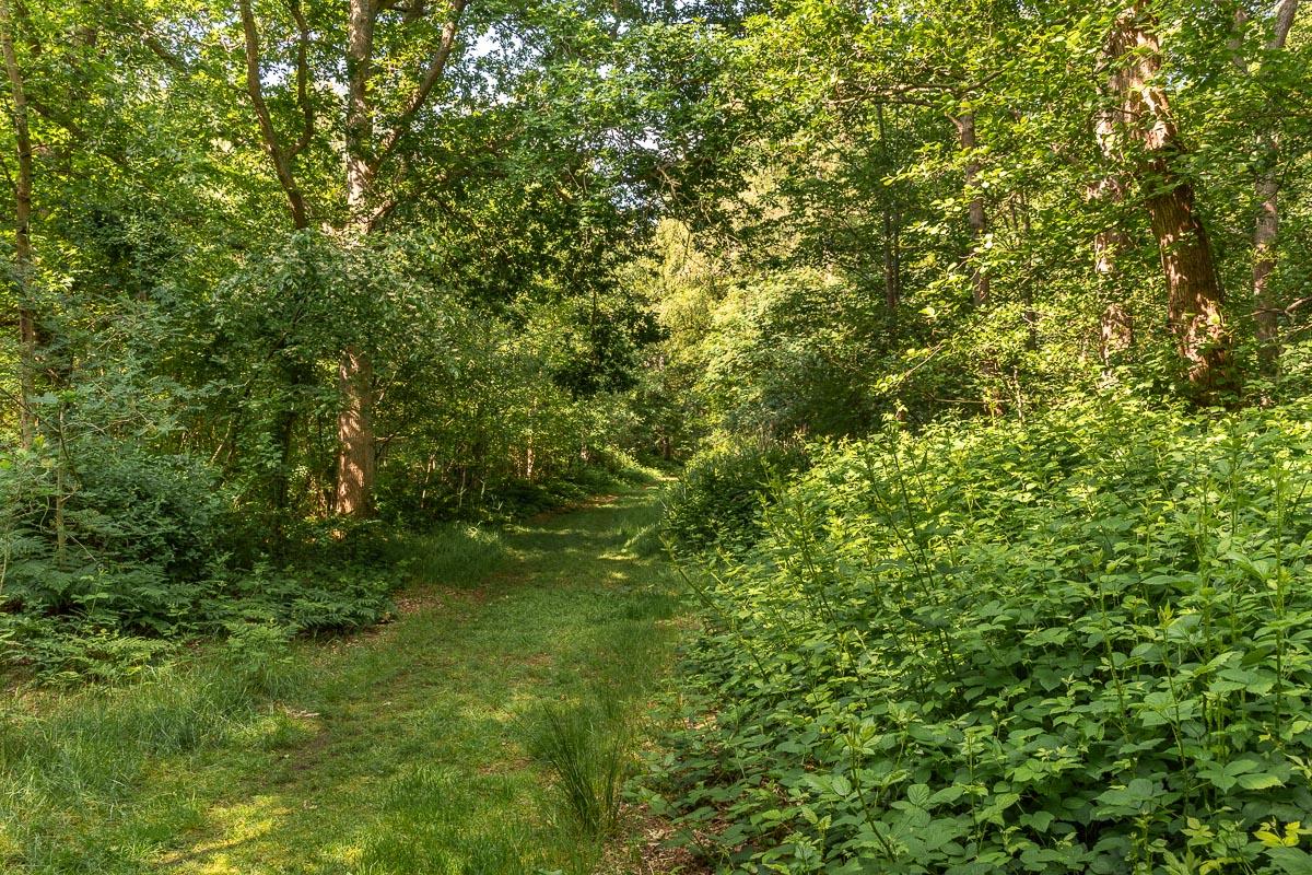 Natur pur im Kiefernwald auf Texel