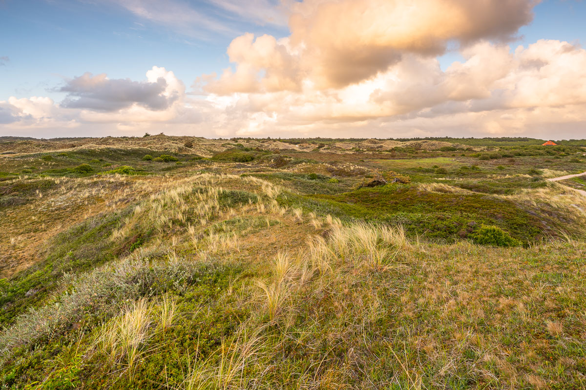 Landschaft im Het Alloo