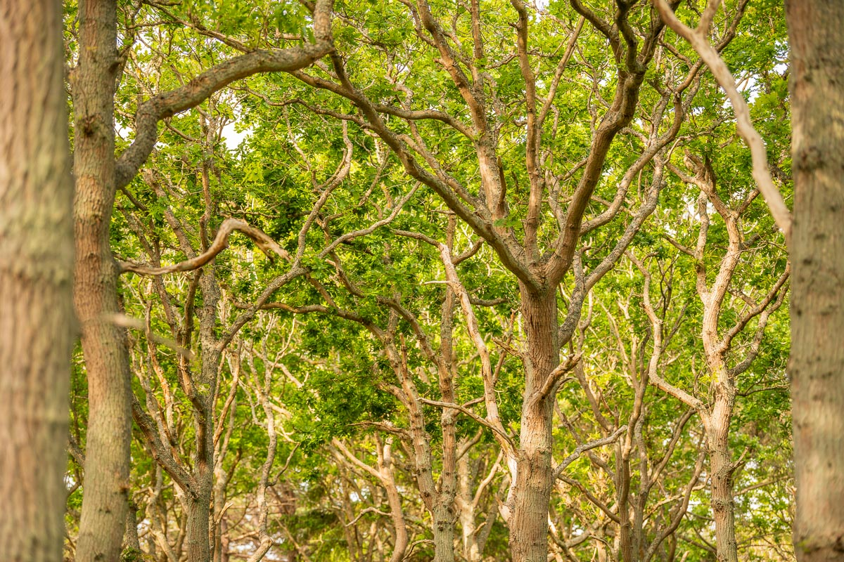 Schnörkelige Bäume auf Texel