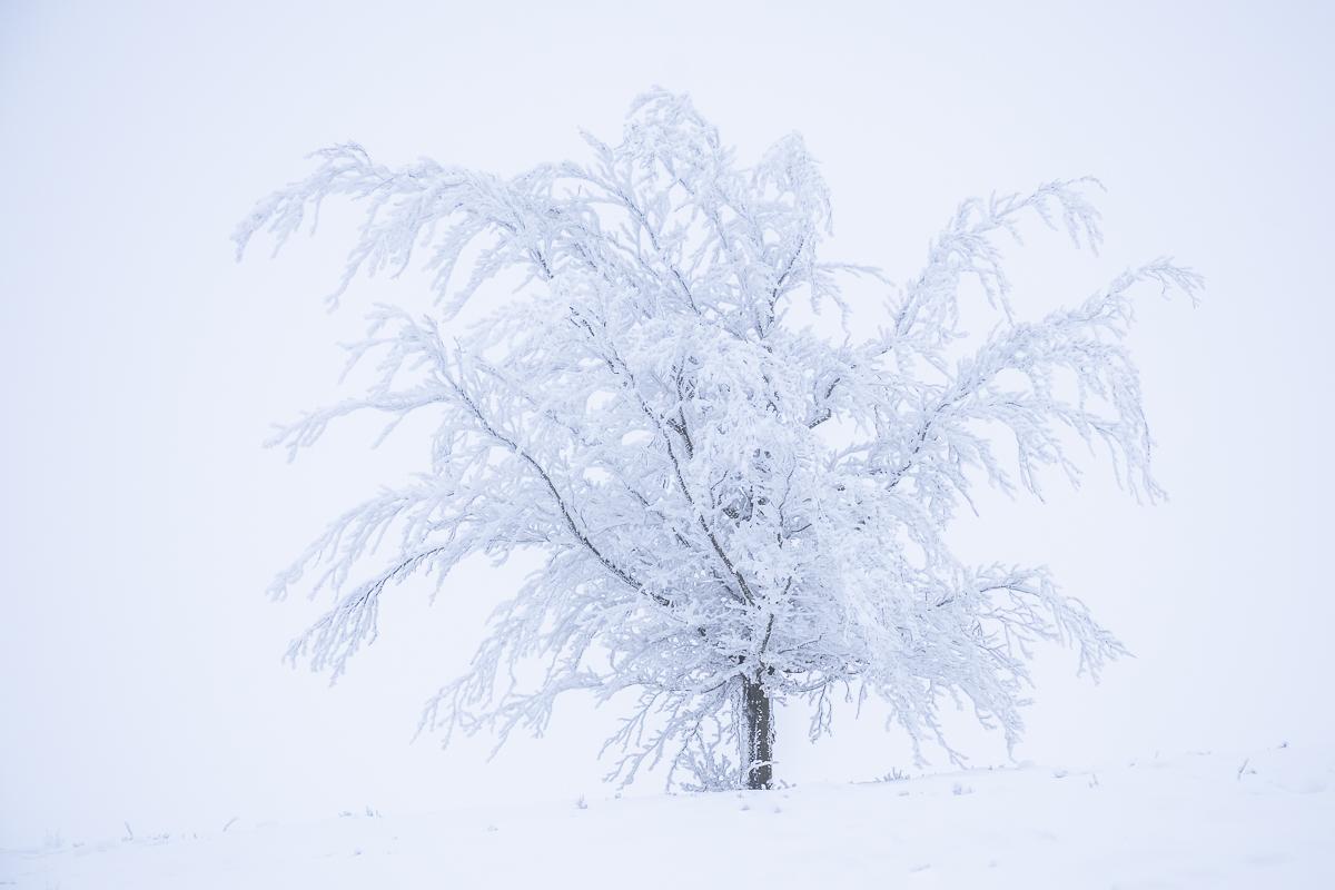 Verschneite Bäume im Sauerland