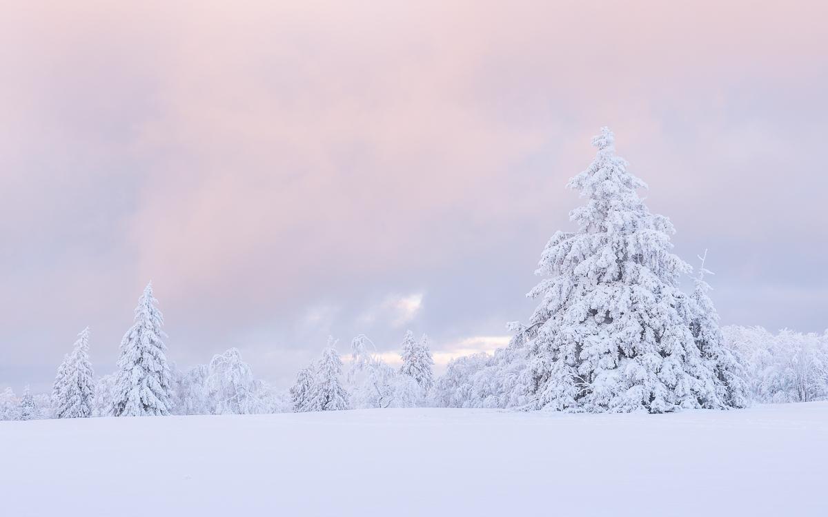 Rosa Licht am Himmel vor Schneelandschaft